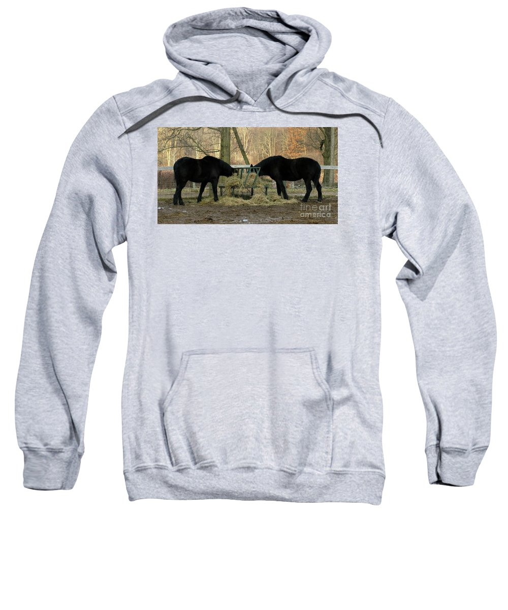 Horse Sweatshirt featuring the photograph Barnyard Beauties by Ann Horn