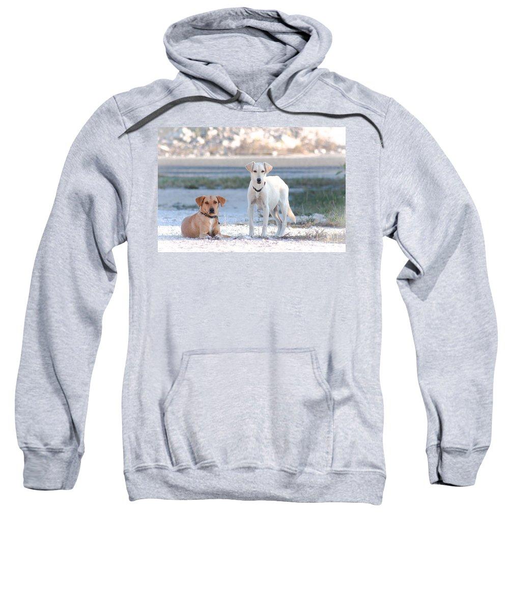 Beach Sweatshirt featuring the photograph Beach Dogs by Carolina Mendez