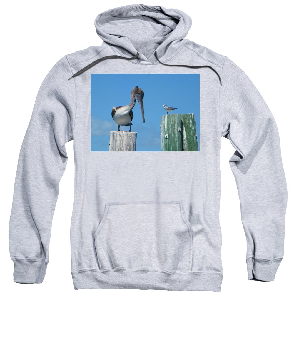 Pelican Sweatshirt featuring the photograph Beat It by Greg Graham