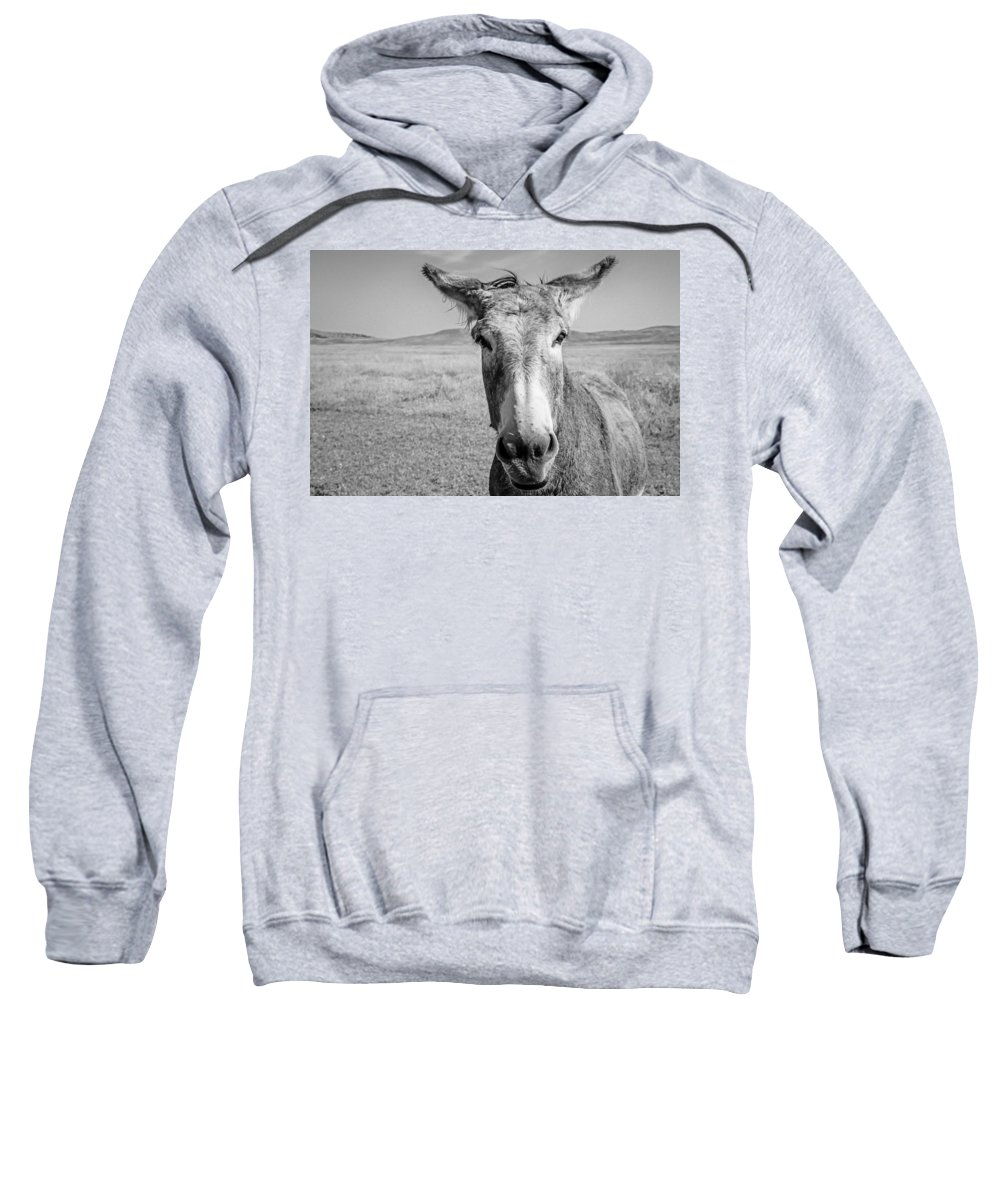 Burro Sweatshirt featuring the photograph Begging Burro by Lynn Sprowl