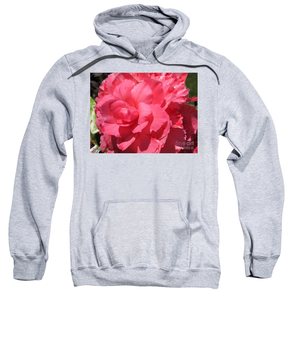 Begonia Sweatshirt featuring the photograph Begonia Named Non-stop Pink by J McCombie