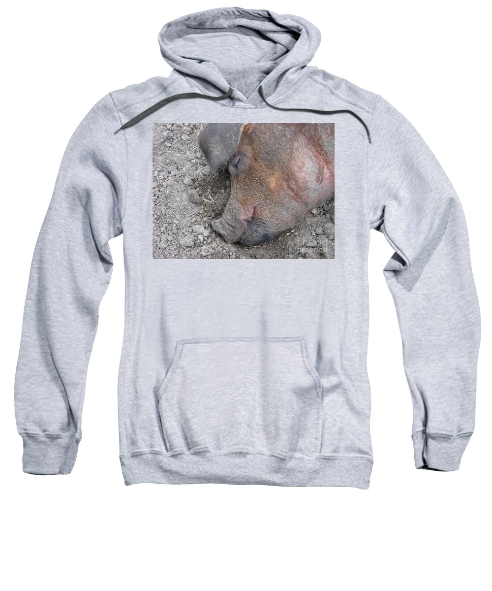 Pig Sweatshirt featuring the photograph Big Dreamer by Ann Horn