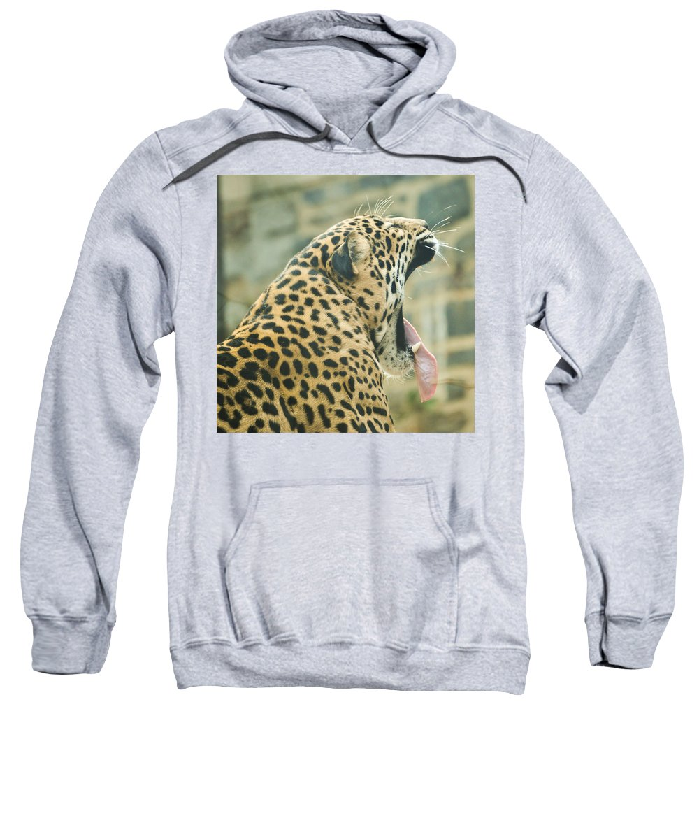 Cat Sweatshirt featuring the mixed media Big Yawn by Trish Tritz