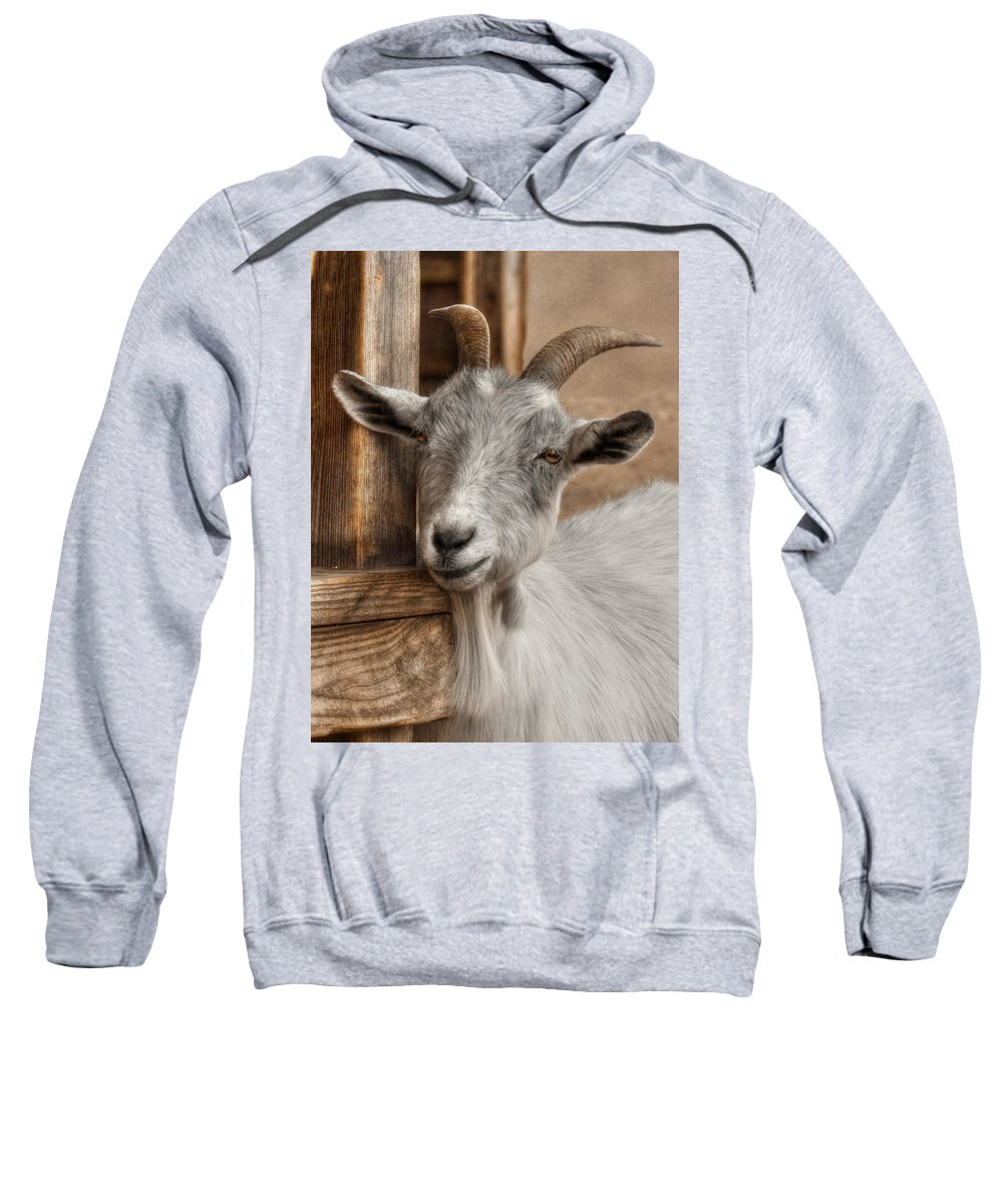 Billy Goat Sweatshirt featuring the photograph Billy Goat by Lori Deiter