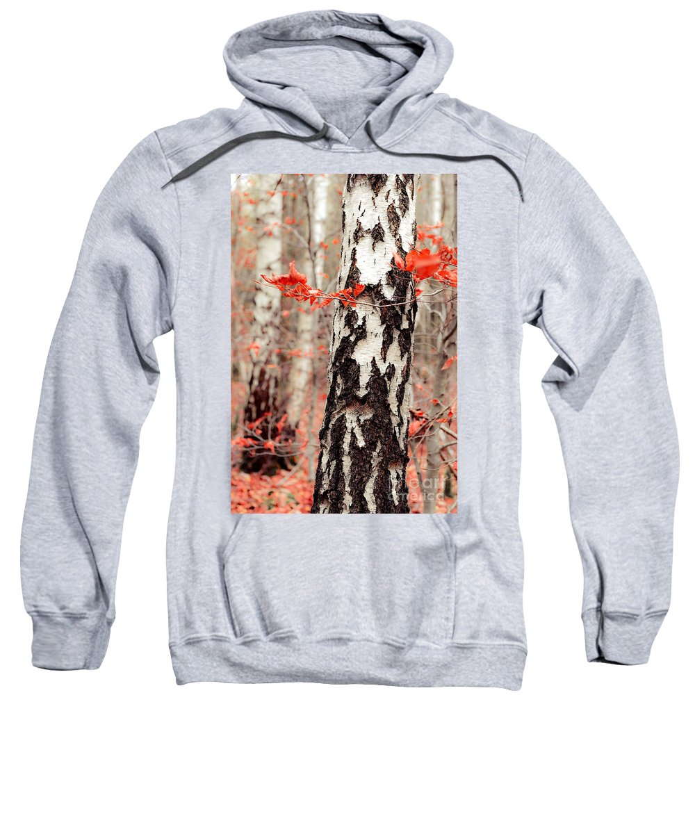 Autumn Sweatshirt featuring the photograph Birches And Beeches by Hannes Cmarits