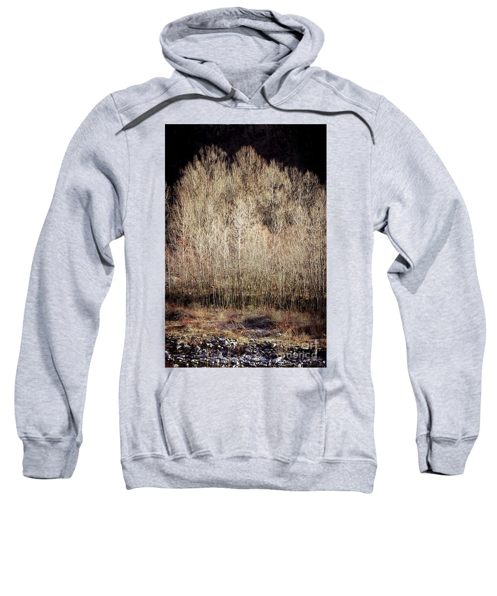 Autumnal Sweatshirt featuring the photograph Birches In Winter by Silvia Ganora