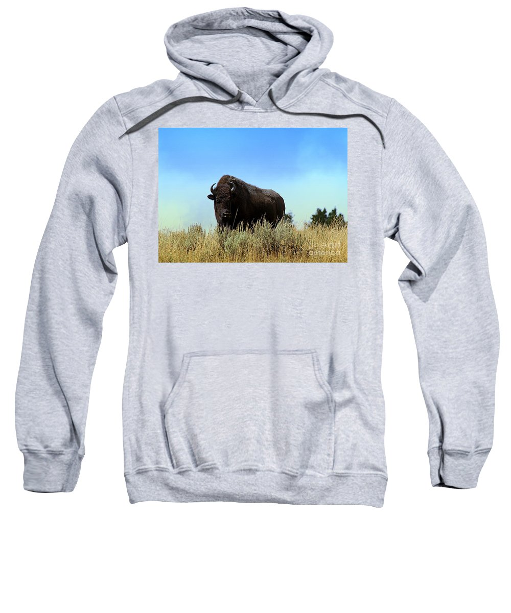 Bison Sweatshirt featuring the photograph Bison Cow On An Overlook In Yellowstone National Park by Catherine Sherman