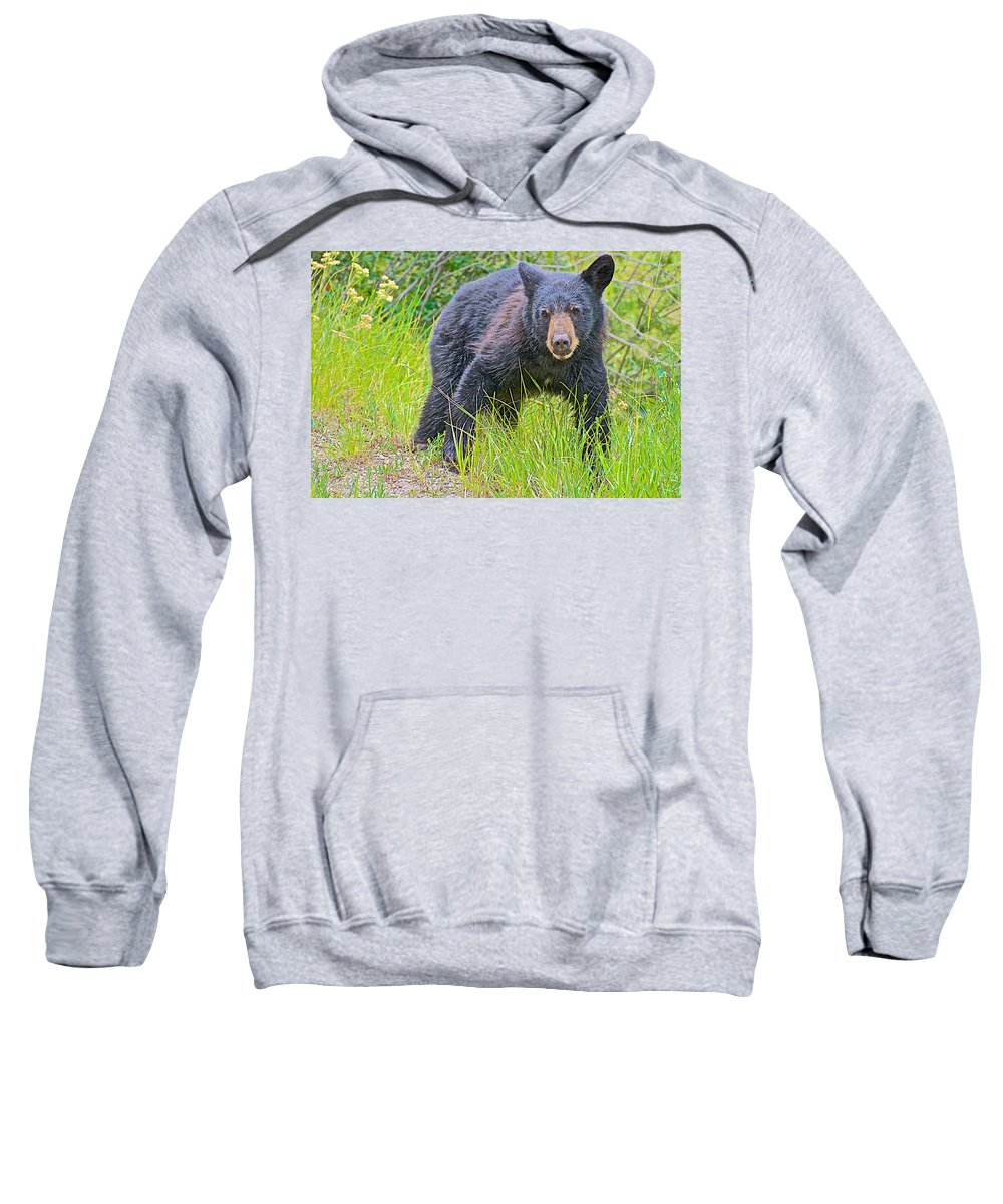 Black Bear Cub Near Road In Grand Teton National Park Sweatshirt featuring the photograph Black Bear Cub Near Road In Grand Teton National Park-wyoming by Ruth Hager