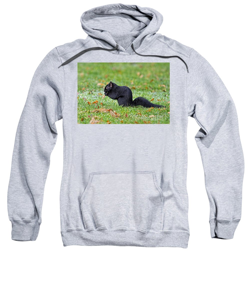 Squirrel Sweatshirt featuring the photograph Black Squirrel by Sharon Talson