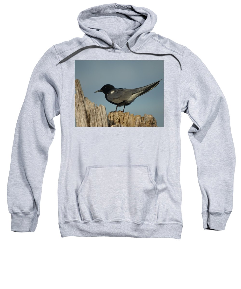 Jim Sweatshirt featuring the photograph Black Tern by James Peterson