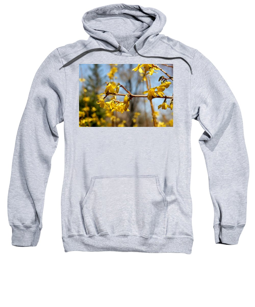 Forsythia Sweatshirt featuring the photograph Blooming Forsythia by Barbara S Nickerson