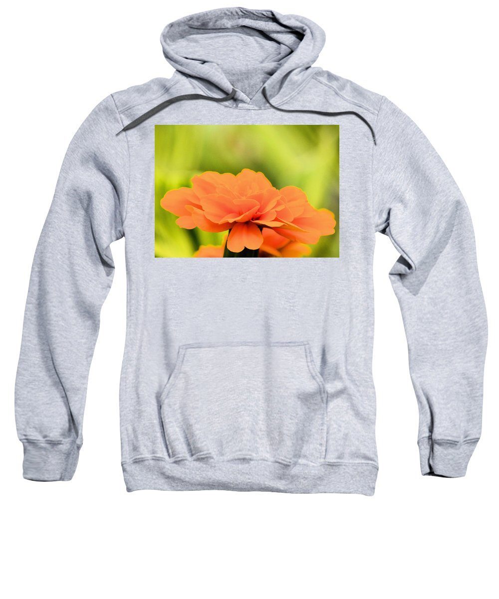 Blooming Marigold Sweatshirt featuring the photograph Blooming Marigold by Maria Urso