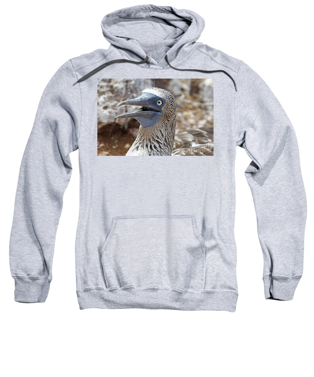 Blue-footed Boobie Sweatshirt featuring the photograph Blue Footed Boobie Galapagos by Jason O Watson