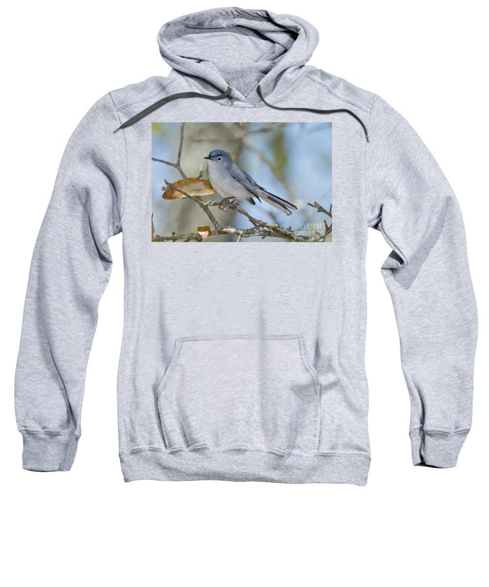 Blue-gray Gnatcatcher Sweatshirt featuring the photograph Blue-gray Gnatcatcher by Anthony Mercieca