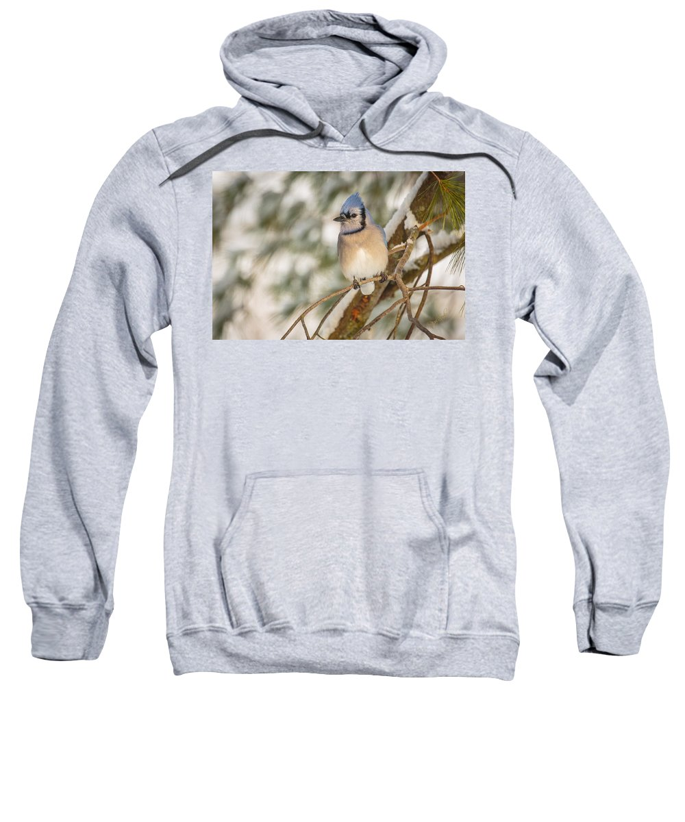 Bluejay Sweatshirt featuring the photograph Blue Jay by Everet Regal