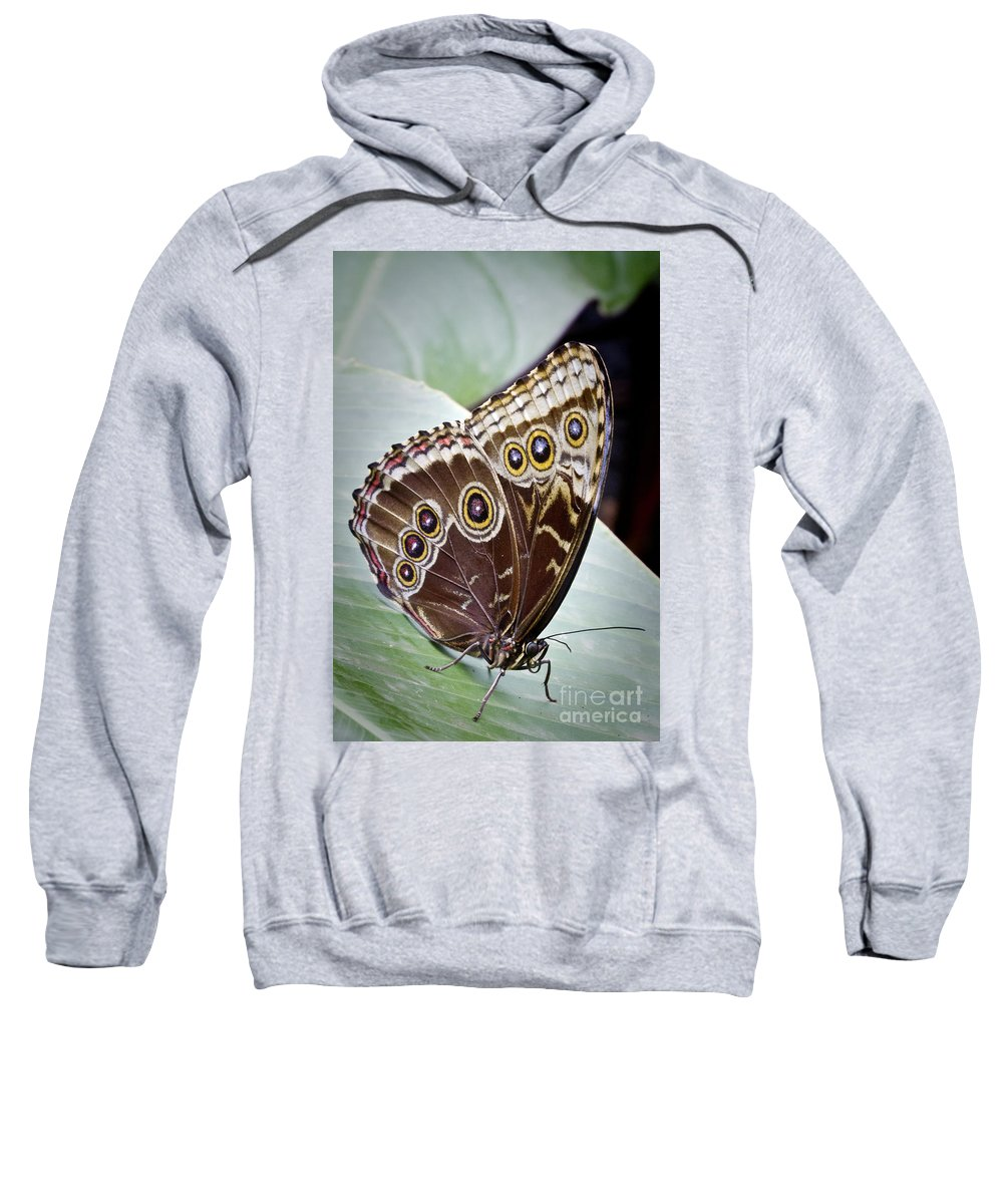 Blue Morpho Butterfly Sweatshirt featuring the photograph Blue Morpho Butterfly Costa Rica by Carrie Cranwill
