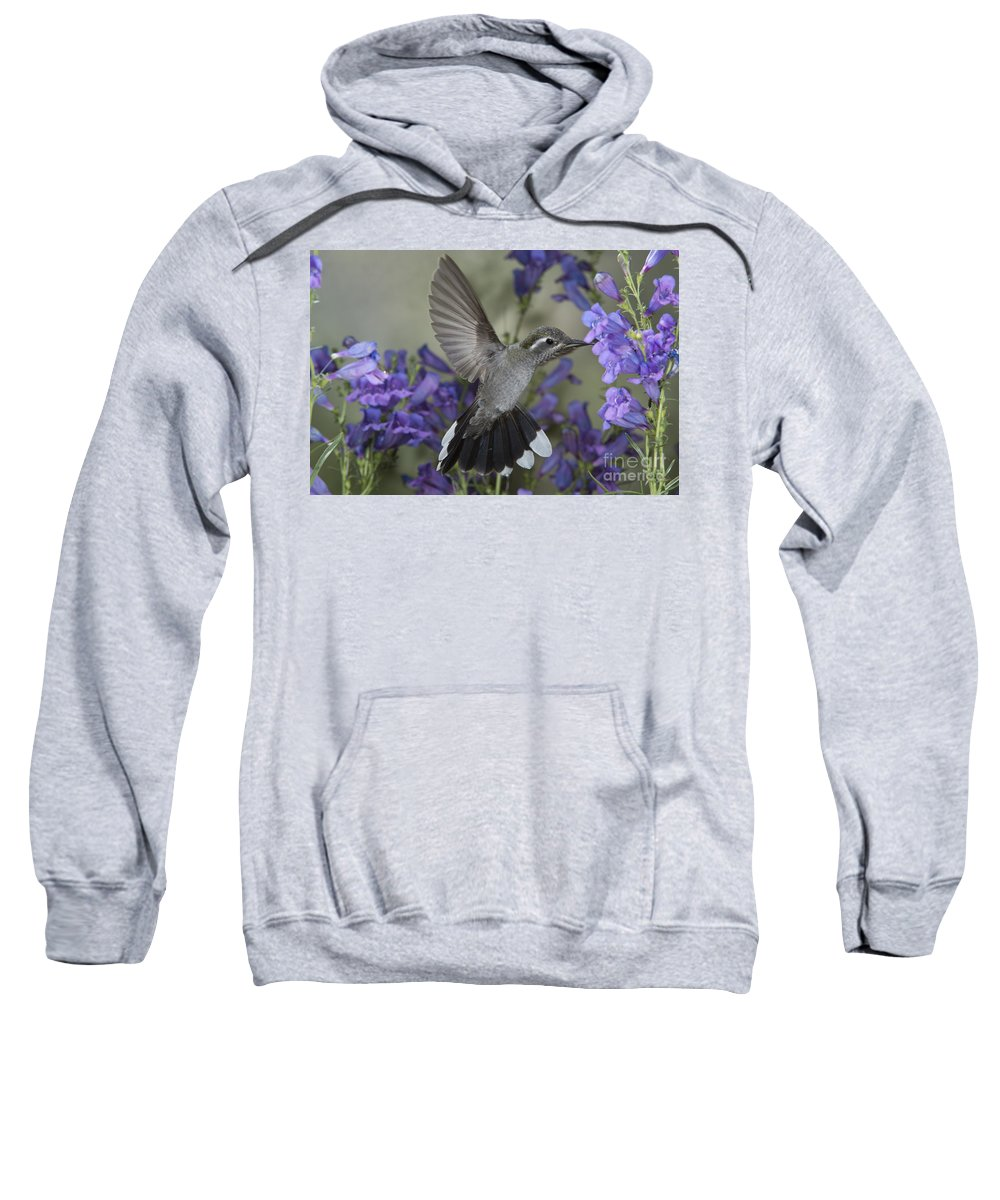 Blue-throated Hummingbird Sweatshirt featuring the photograph Blue-throated Hummingbird by Anthony Mercieca