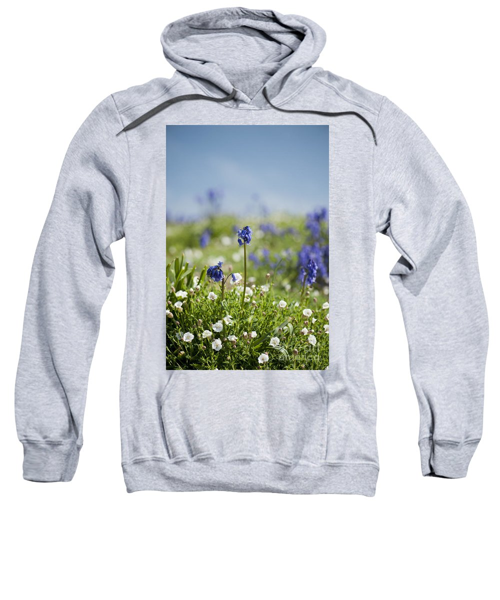 Background Sweatshirt featuring the photograph Bluebells In Sea Campion by Anne Gilbert
