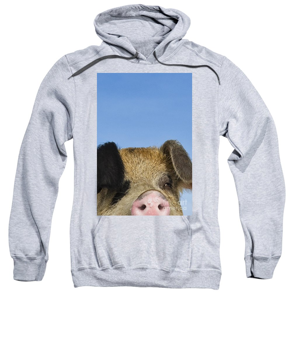 Boar Sweatshirt featuring the photograph Boar by Jean-Louis Klein and Marie-Luce Hubert