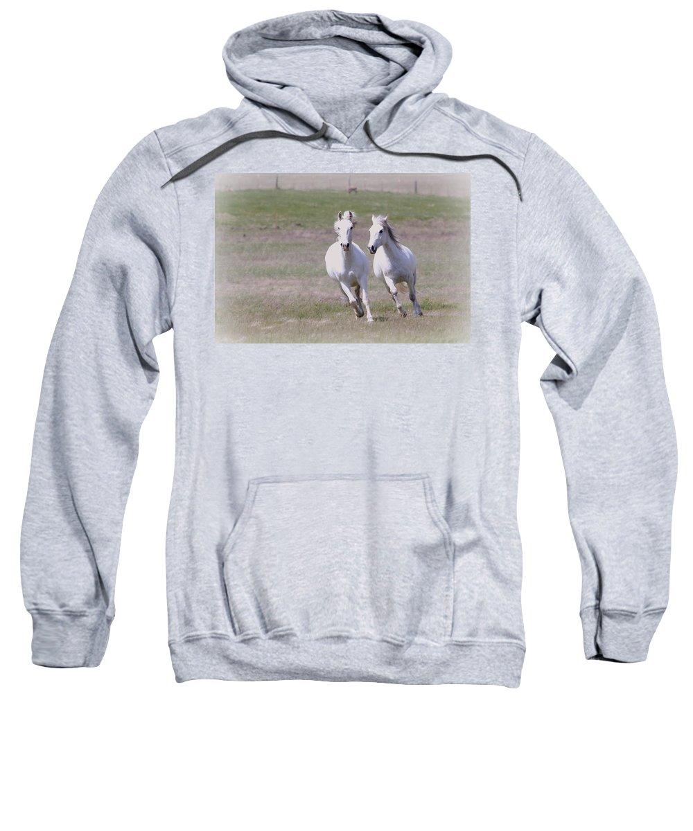 Horses Sweatshirt featuring the photograph Lipizzaner Stallions by Athena Mckinzie
