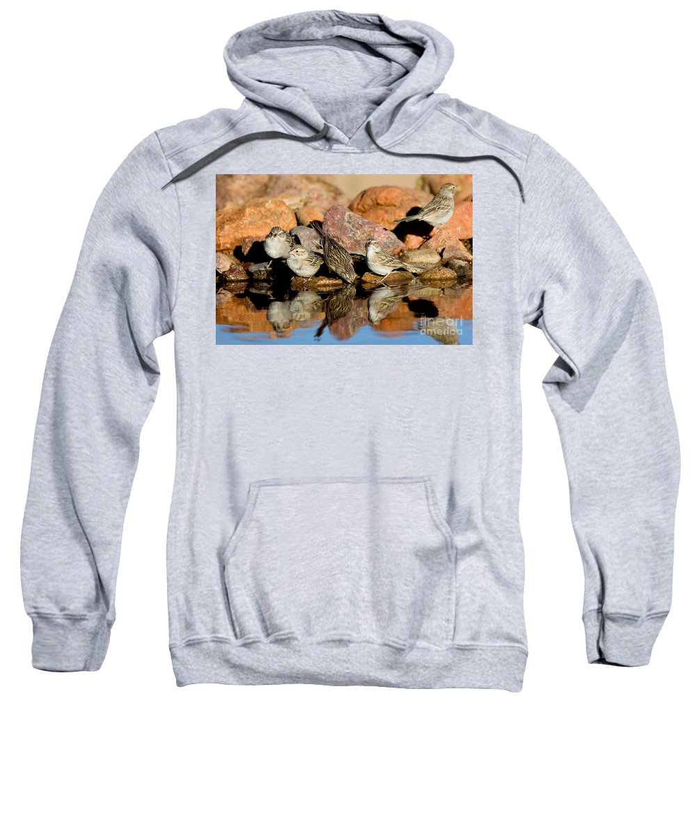 Fauna Sweatshirt featuring the photograph Brewers Sparrows At Waterhole by Anthony Mercieca