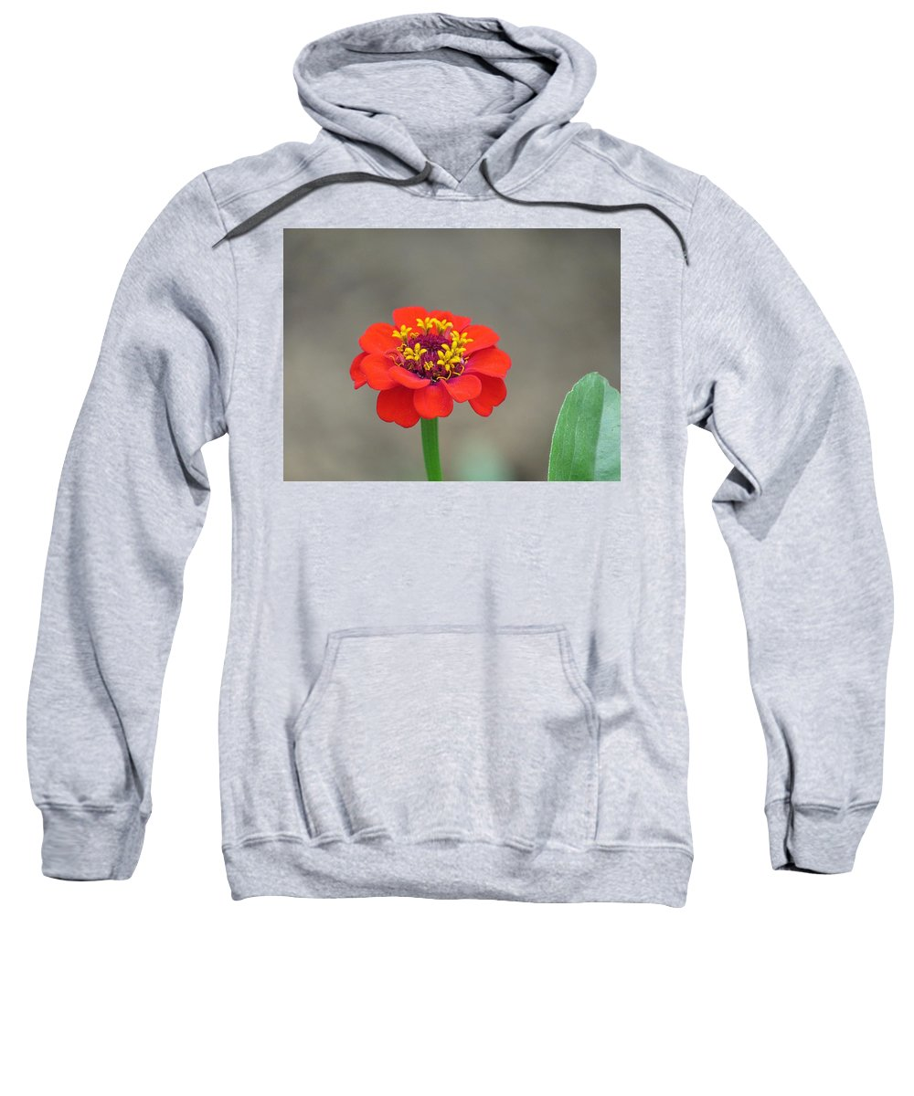 Zinnia Sweatshirt featuring the photograph Bright Zinnia by MTBobbins Photography