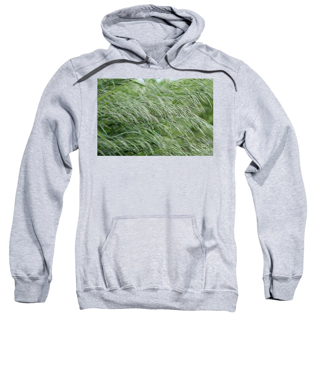 Mccombie Sweatshirt featuring the photograph Brome Grass In The Hay Field by J McCombie