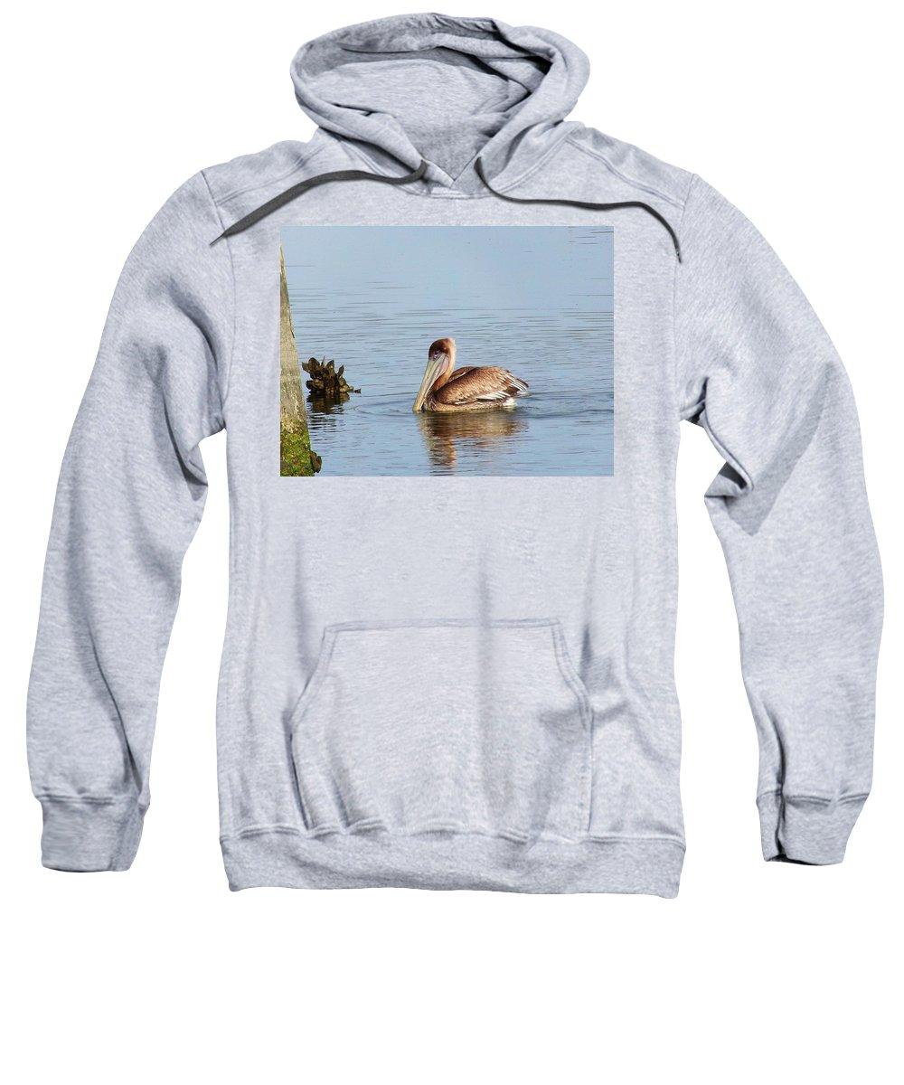 Beach Sweatshirt featuring the photograph Brown Pelican by Gary Creson