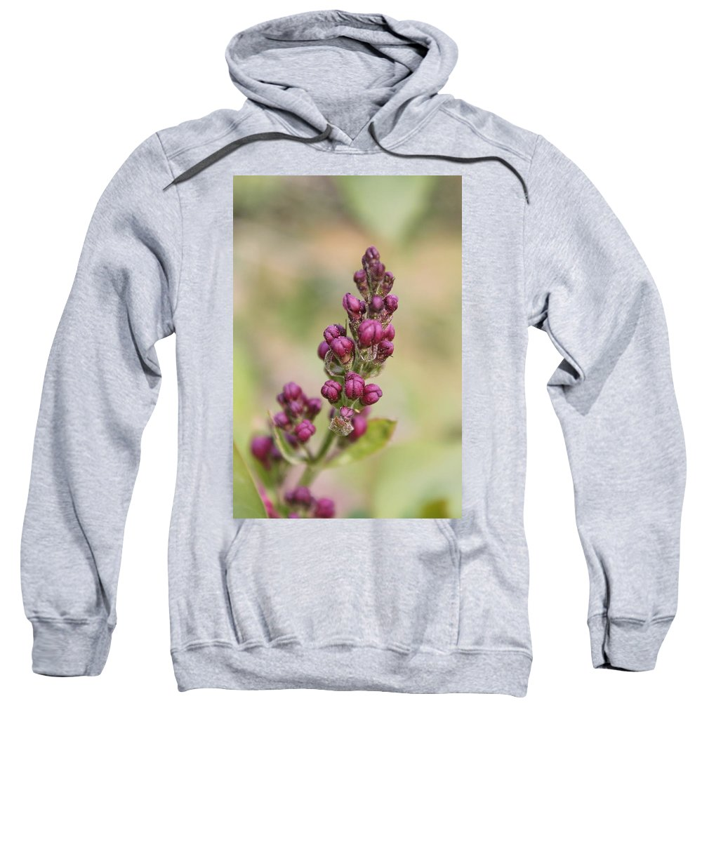 Lilac Sweatshirt featuring the photograph Budding Lilac 4 by Francie Davis