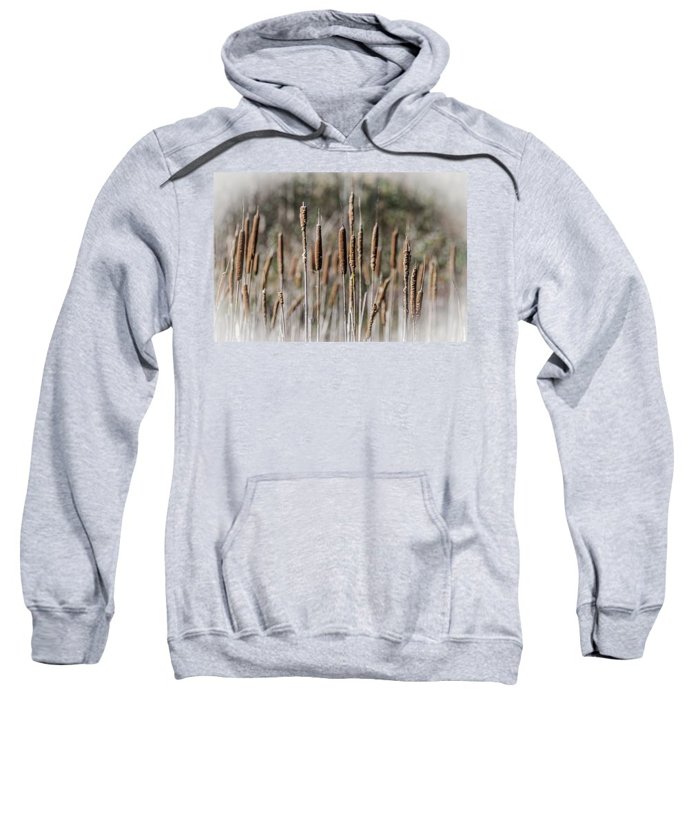 Bulrush Sweatshirt featuring the photograph Bulrushes by Steve Purnell