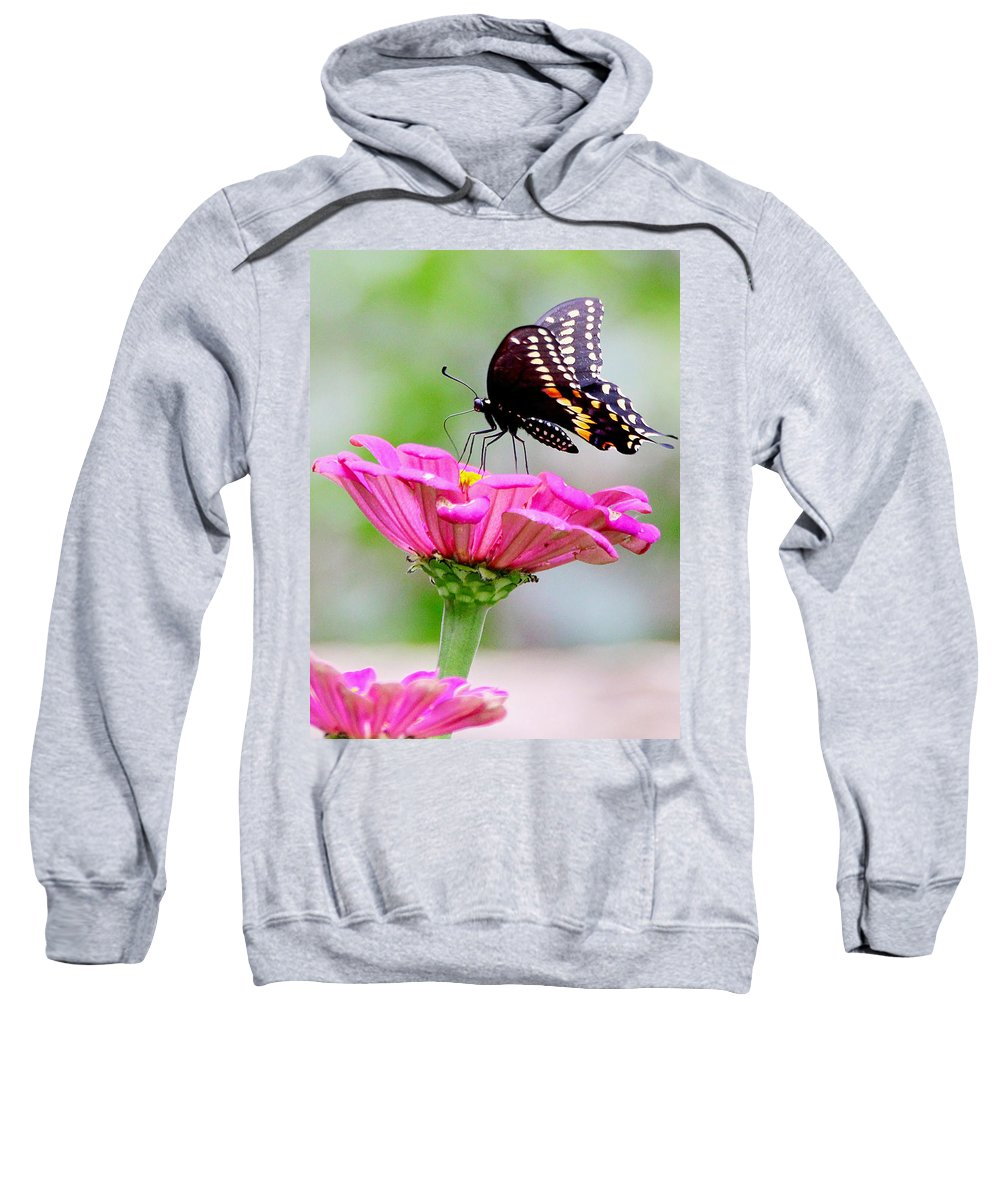 Butterfly Sweatshirt featuring the photograph Butterfly On Pink Flower by Deb Buchanan