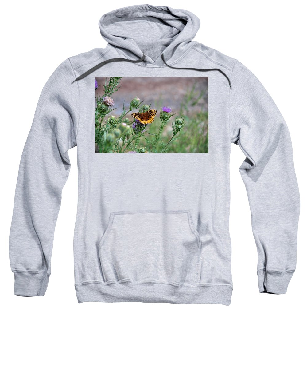 Butterfly Sweatshirt featuring the photograph Butterfly On Thistle by Francie Davis