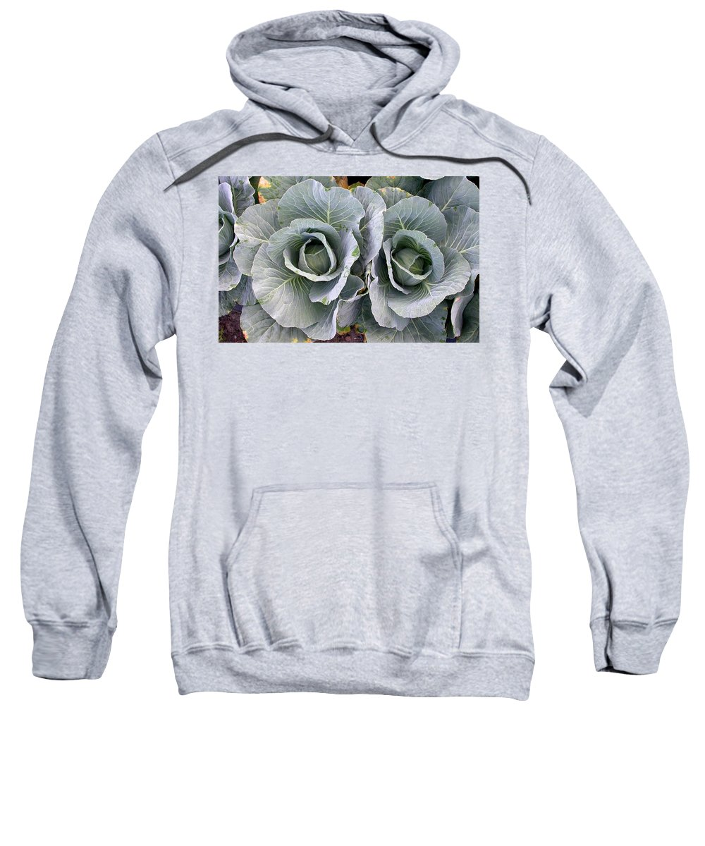 Cabbage Rows Sweatshirt featuring the photograph Cabbage Duo by Cynthia Wallentine