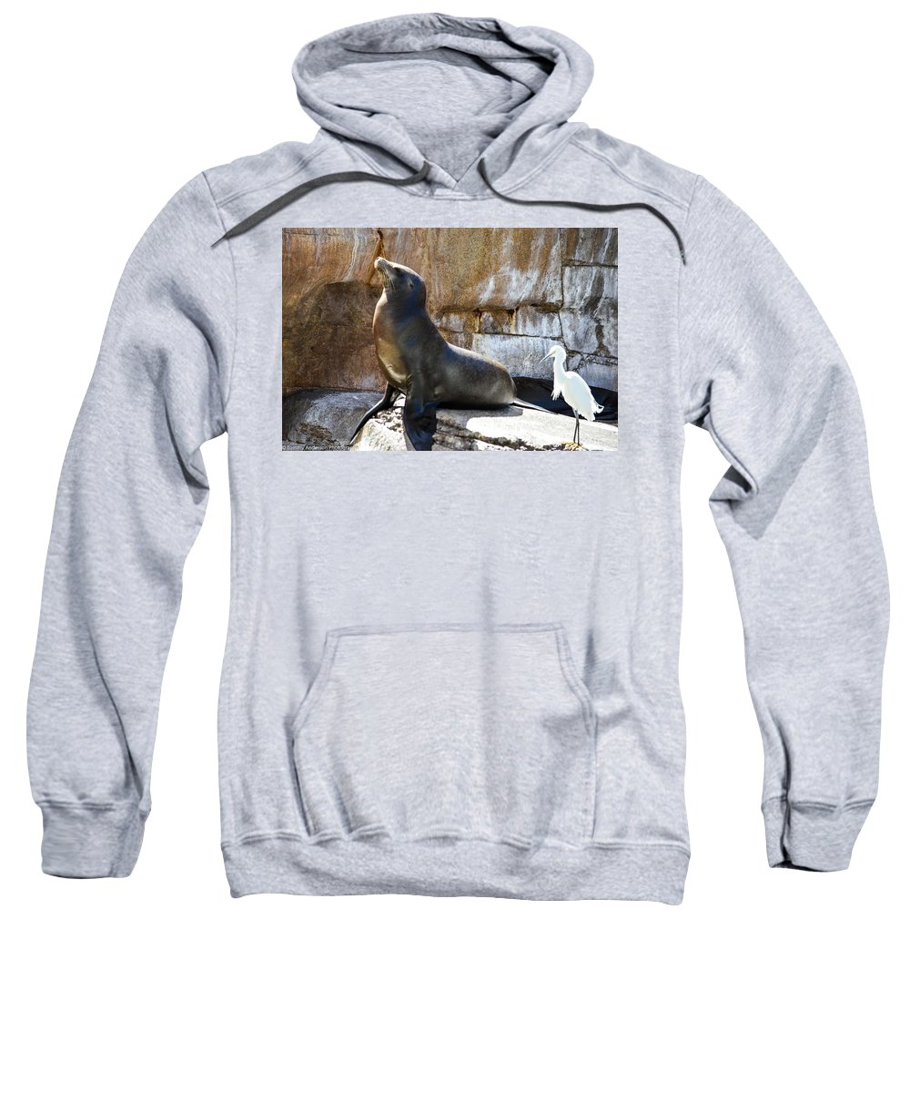 California Sweatshirt featuring the photograph California Sea Lion by Tommy Anderson