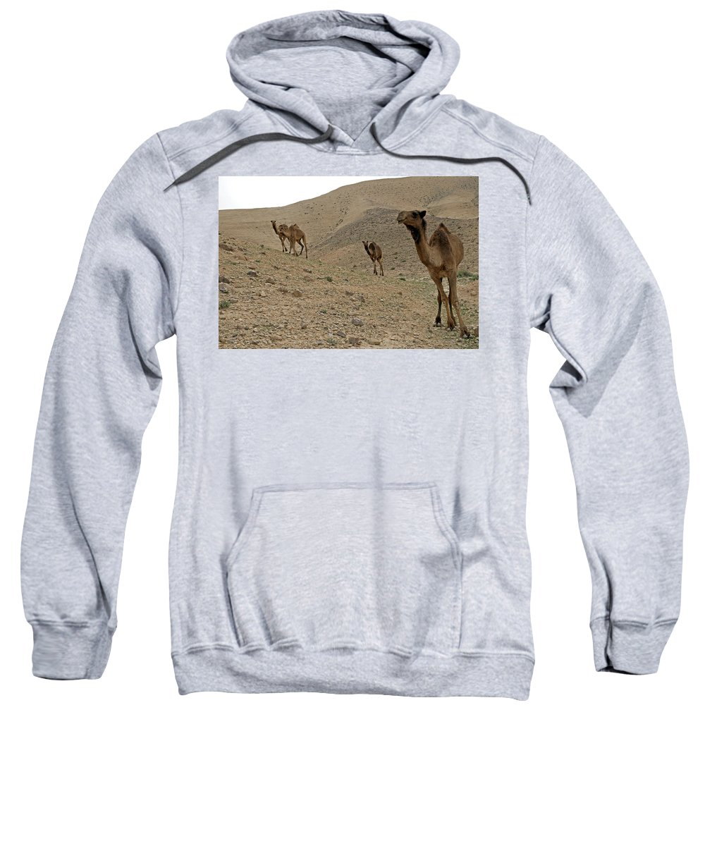 Camels Sweatshirt featuring the photograph Camels At The Israel Desert -2 by Dubi Roman