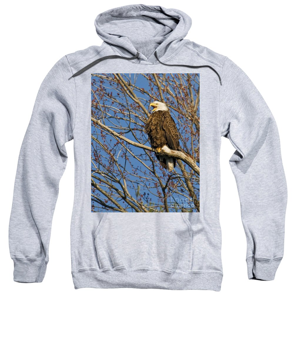 Eagles Sweatshirt featuring the photograph Can You Hear Me by Claudia Kuhn