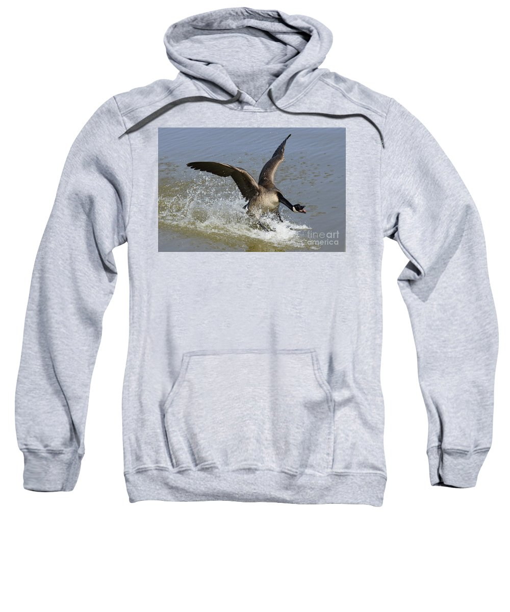 Canada Goose Sweatshirt featuring the photograph Canada Goose Touchdown by Bob Christopher