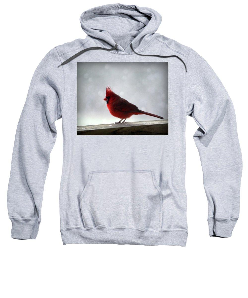 Cardinal Sweatshirt featuring the photograph Cardinal by Cricket Hackmann