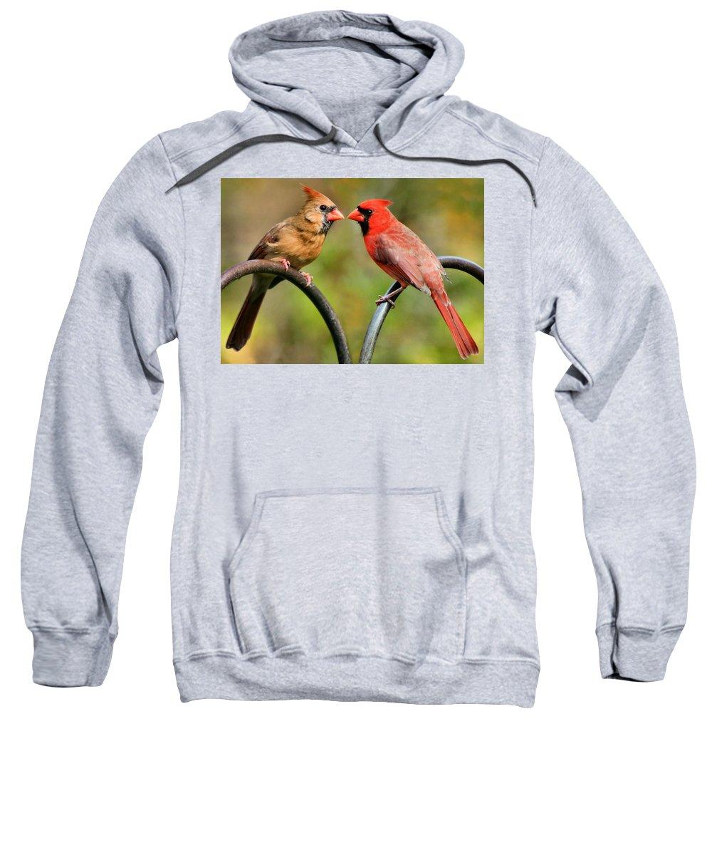 Cardinalis Sweatshirt featuring the photograph Cardinal Love by Kristin Elmquist