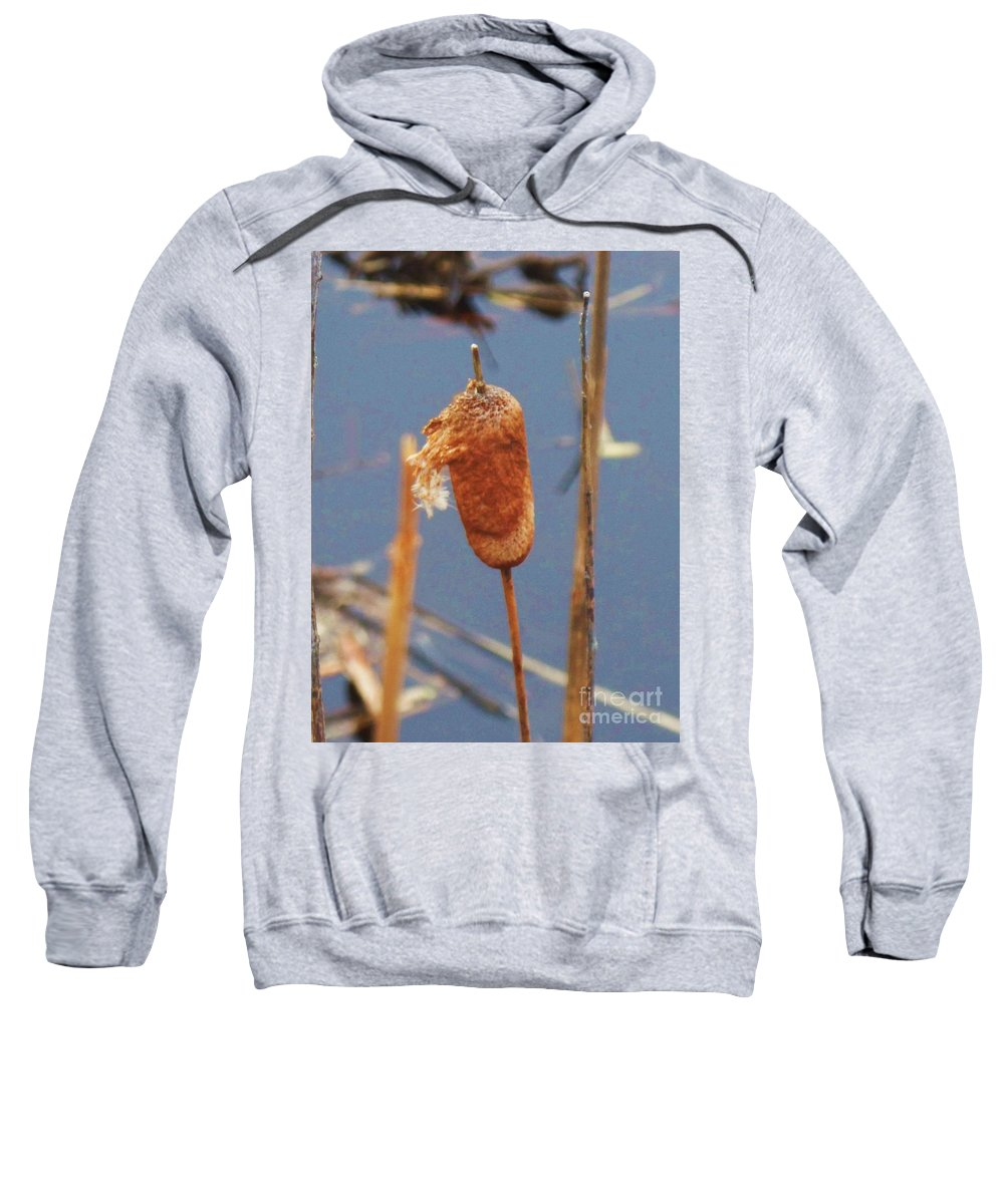 Lake Sweatshirt featuring the photograph Catails by Eric Schiabor