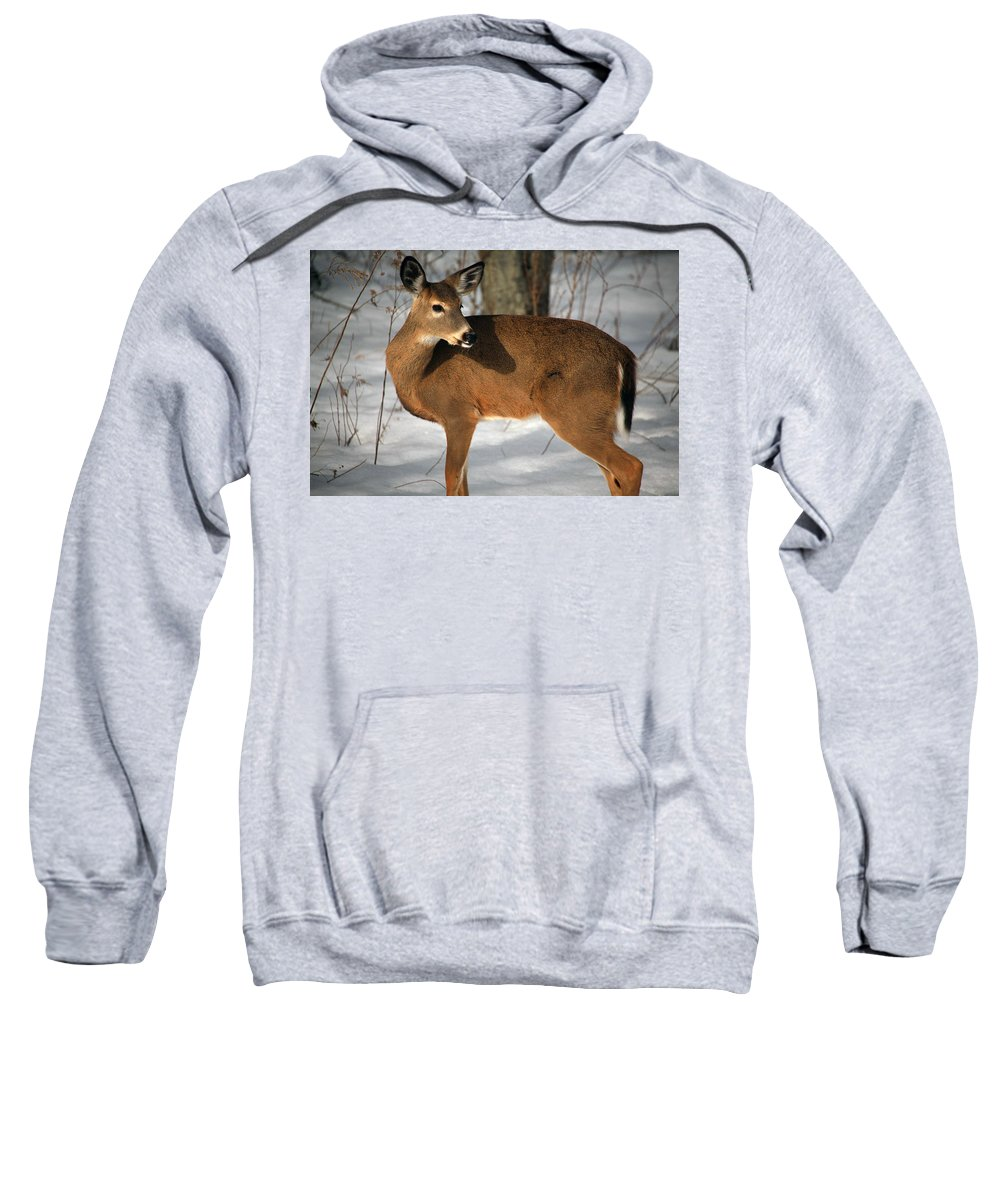 Catching Some Rays Sweatshirt featuring the photograph Catching Some Rays by Karol Livote