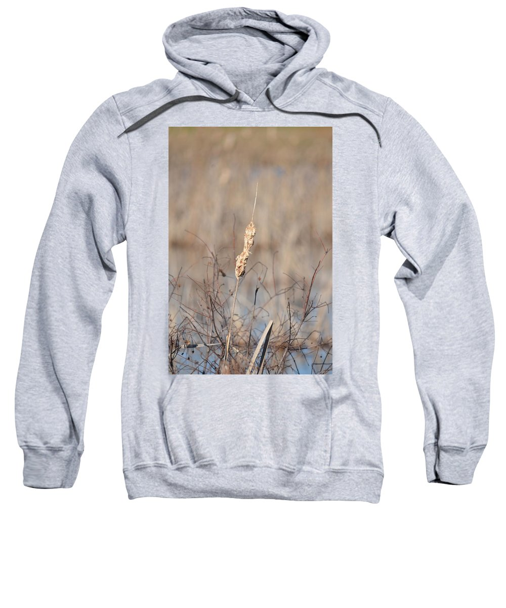 Cattail Gold Sweatshirt featuring the photograph Cattail Gold by Maria Urso