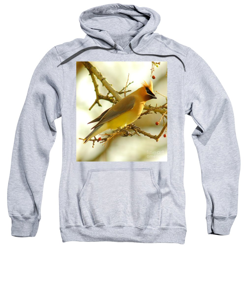 Cedar Waxing Hooded Sweatshirts T-Shirts