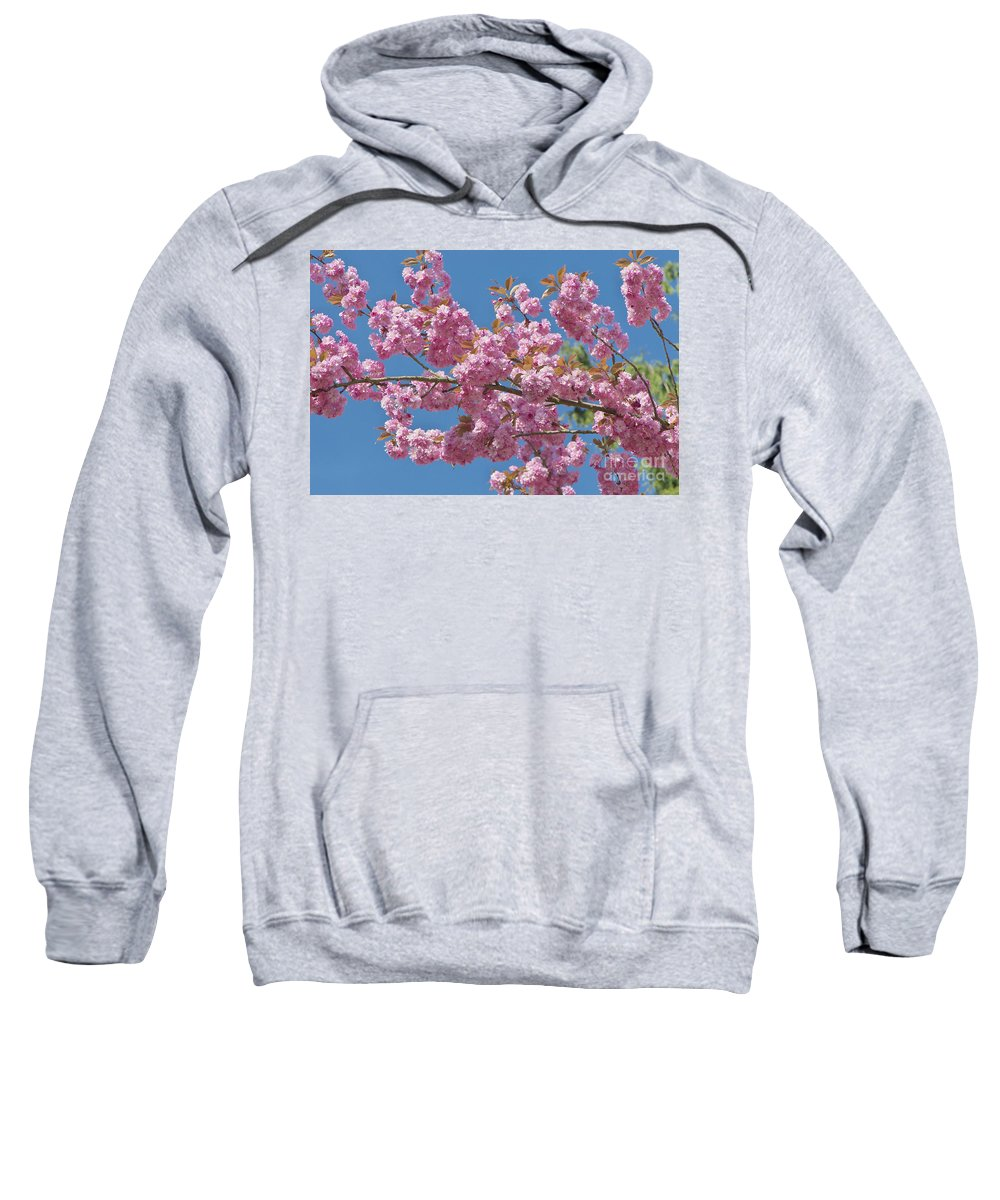 Cherry Blossoms Sweatshirt featuring the photograph Cherry Blossoms by Sharon Talson