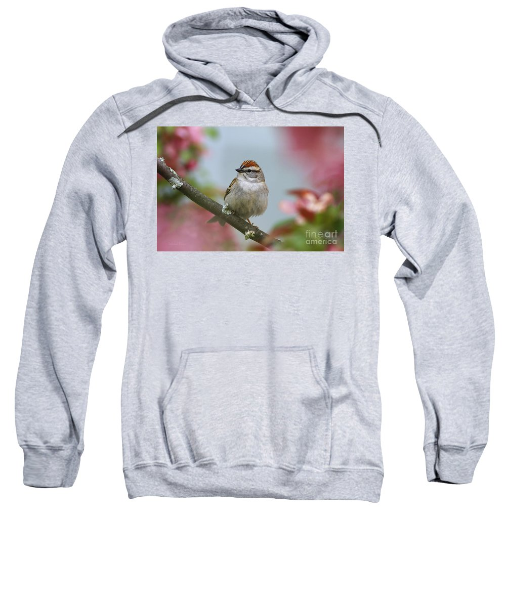 Bird Sweatshirt featuring the photograph Chipping Sparrow In Blossoms by Deborah Benoit