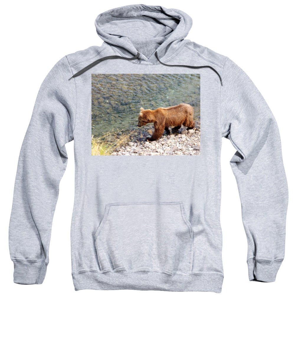 Cinnamon-colored Grizzly Bear In Moraine River Sweatshirt featuring the photograph Cinnamon-colored Grizzly Bear By Moraine River In Katmai Np-ak by Ruth Hager