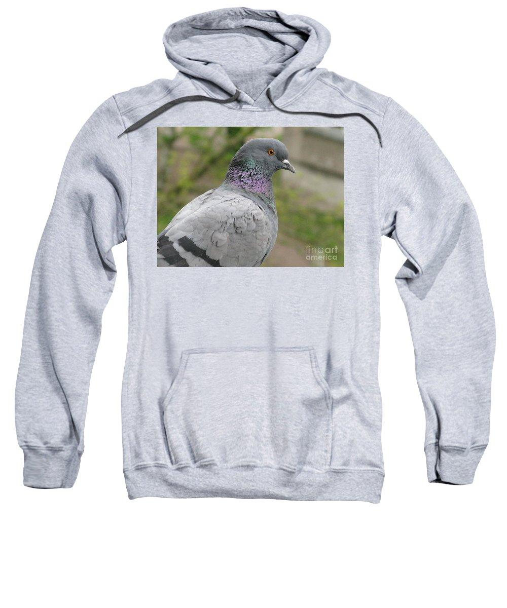 City Pigeon Sweatshirt featuring the photograph City Pigeon by Ausra Huntington nee Paulauskaite