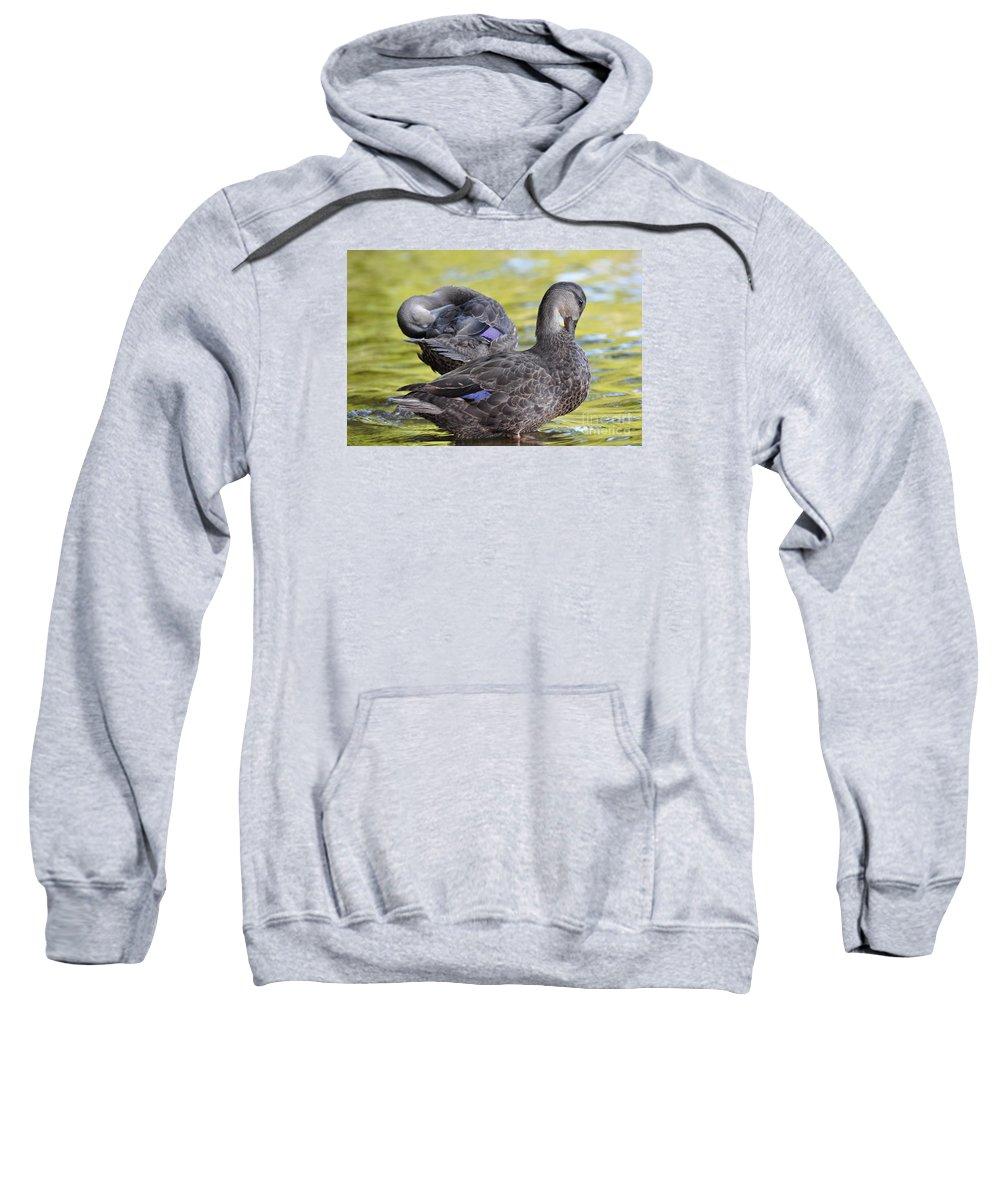 Ducks Sweatshirt featuring the photograph Ducks On Green by Glenn Gordon
