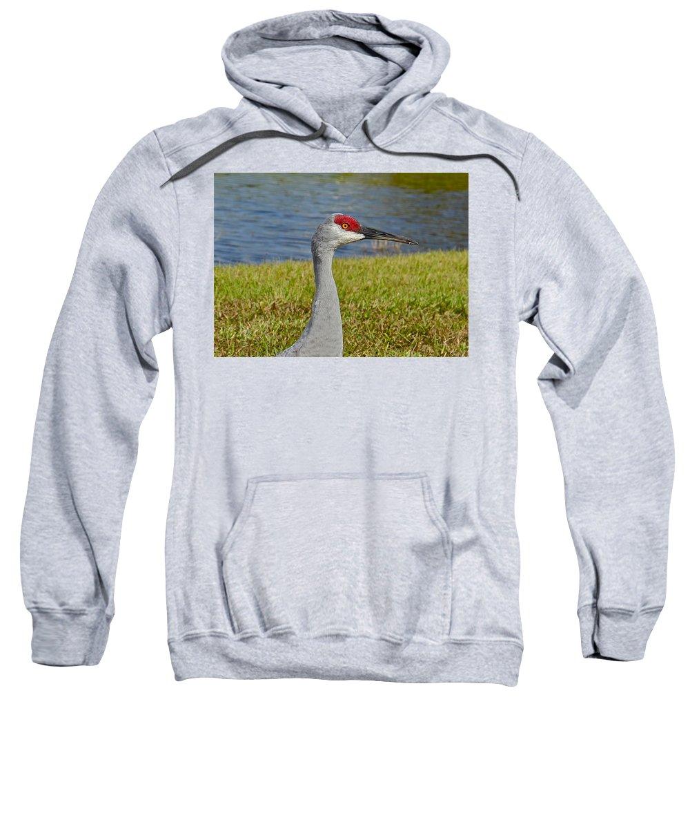 Birds Sweatshirt featuring the photograph Close Up Of A Sandhill Crane by Denise Mazzocco