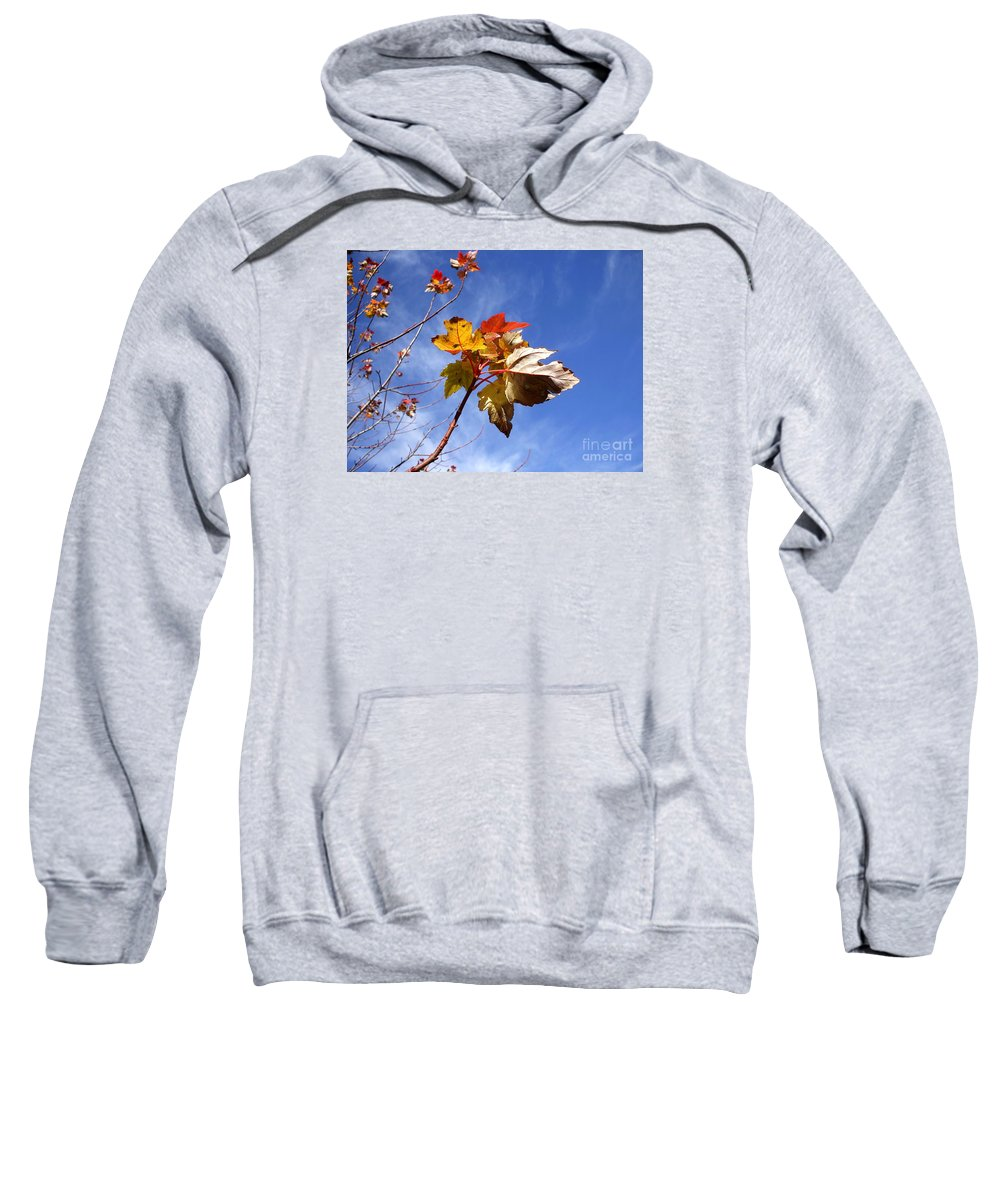 Sky Sweatshirt featuring the photograph Colorful Fall Leave's With Blue Sky by Robert D Brozek